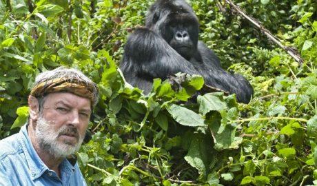 turistas gorilas